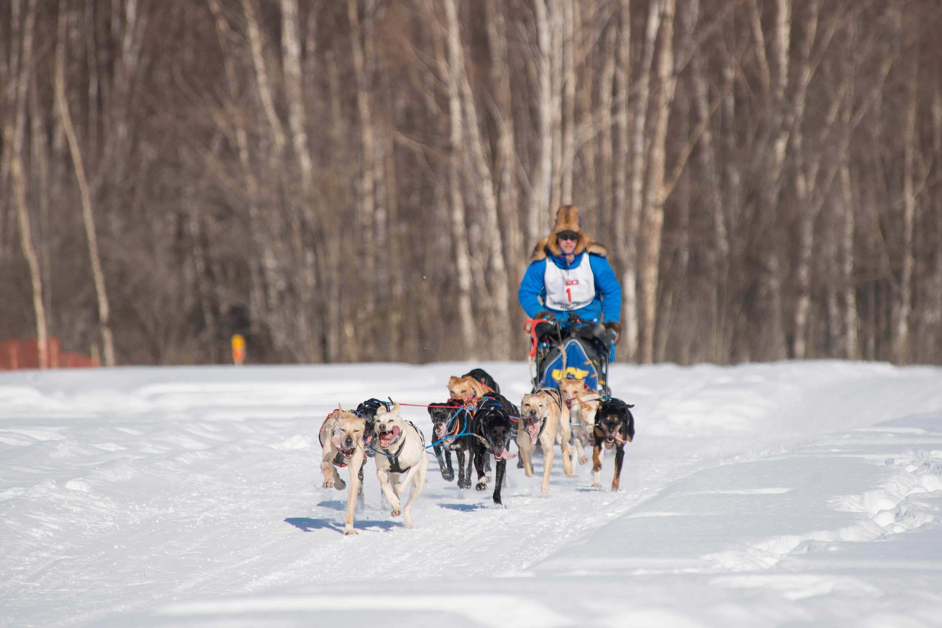 Dog Mushing 2